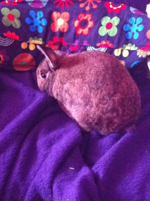 bunnysaysrelax:  Today I am having house cleaned, so I make burrow here. Life is about adapting, wise bunnies say.