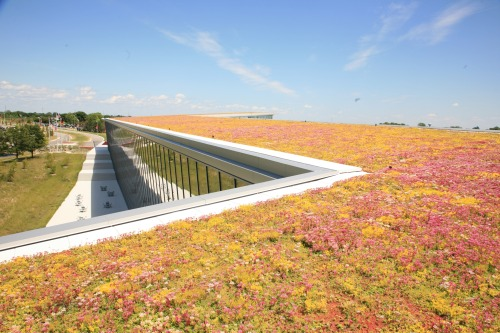 Have you heard about Green Roofs? According to a study by Brad Bass of the University of Toronto, green roofs reduce heat loss and energy consumption is winter conditions, while it can decrease the average temperatures in the city during summer. Naturally, green roofs filter carbon dioxide from the air as well as pollutants such as heavy metals out of rainwater. Sound insulation is another feature. As the soil assists to block lower frequencies, the plants lessens higher frequences. Qualified to undertake LEED projects, FZAD partnered with Liveroof and Verisco Roofing Systems to bring customers all the benefits and aesthetics of the architecture.