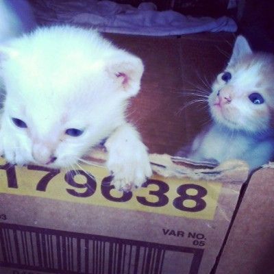 Kittens, why are thou so cute? #kittens #cat