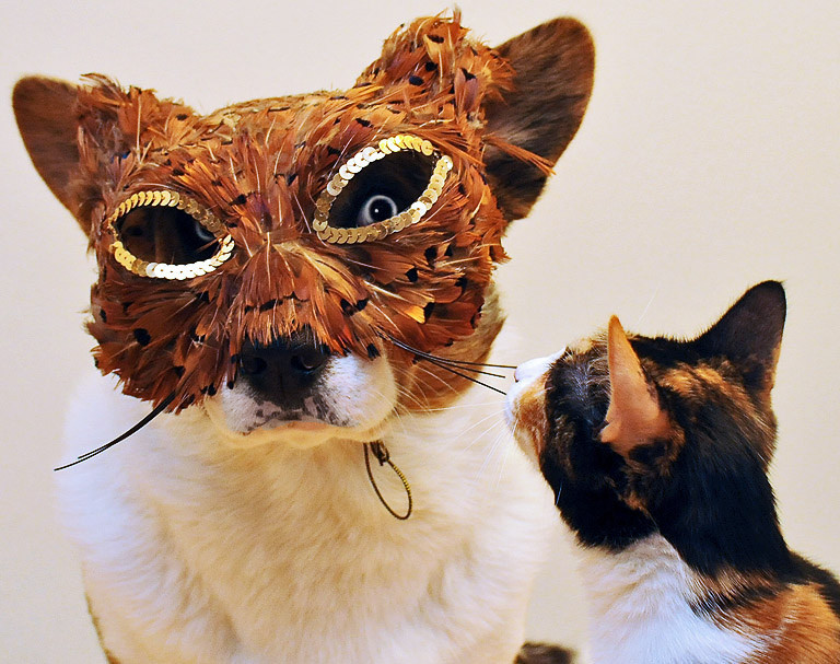 "cats-and-dogs-together:  - ""WTF is that?"" - ""I have no idea!"" By Koratcats @ flickr.com"