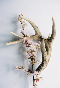 a-lovely-cup-of-jo:  Bone and Blossoms - 1 by Ashley E. Moore on Flickr.