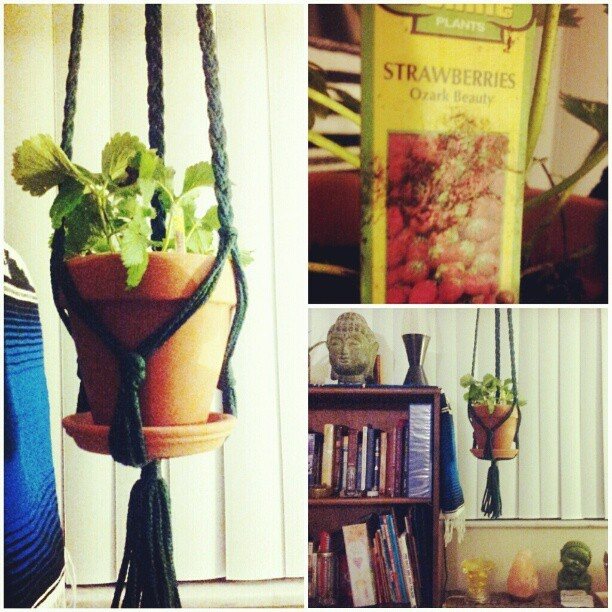 Bought a #strawberry #plant at Home Depot this evening.. It's so adorable, I can't wait to eat fruit off this thing :)
