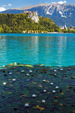 wild-earth:  Lake Bled - Lilly Garden (by John & Tina Reid) Lillies line the shores of a luminescent Lake Bled. Lake Bled lies at the foothills of the Julian Alps in Slovenia. It is a popular holiday resort, particularly amongst outdoor enthusiasts. (via: chvrmed)