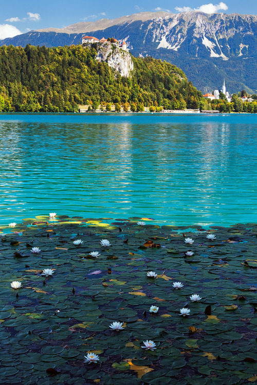 chvrmed:  Lake Bled - Lilly Garden (by John & Tina Reid)