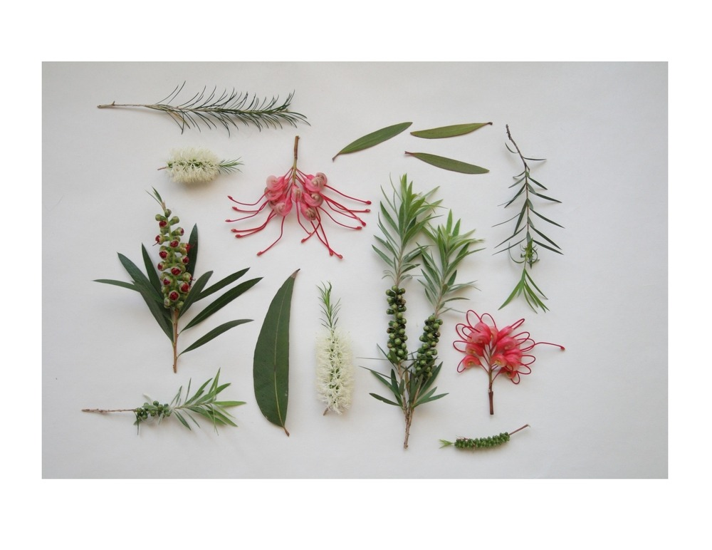(via Alchemy — Botanicals, Arranged print)
