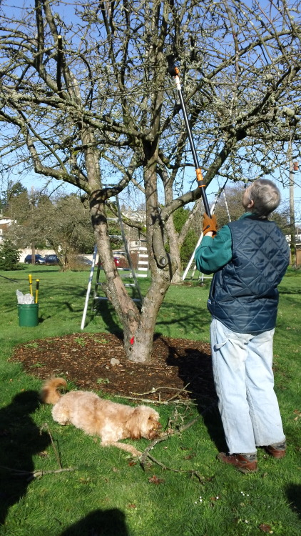 pruning-workshop-for-humans-new-stick-retrieval