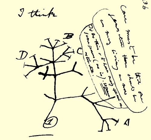 "biologylair:  Photo: Darwin's first sketch of the tree of life from 1837 with the iconic words ""I think"" scrawled at the top left.  Hello Tumblr! Please excuse the recent lack of new posts. I assure you that The Biology Lair is back and ready for 2013! You can look forward to the addition of a new special section in 2013 - Immunology! Feel free to give suggestions to any other new sections you would like to see on the blog. I'd like to thank all the followers of The Biology Lair for their support and appreciation for this blog. And thank you to Tumblr for featuring The Biology Lair in their science spotlight. Here's to a good year! - Maureen"