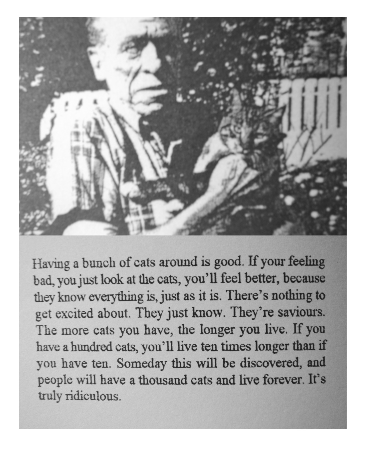Bukowski on cats from Bukowski In His Own Words