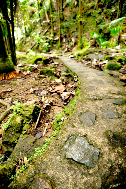 hikeblr:  on the el yunque peak trail