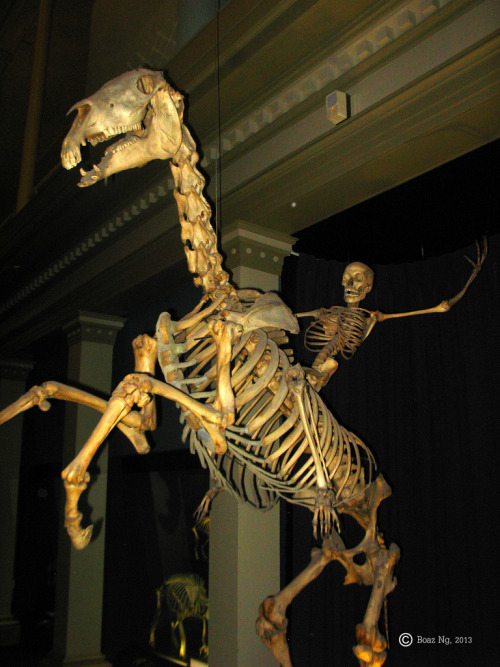 morefunthanbeingsad:  do this with my skeleton when i die please  If this is the Natural History Museum in Sydney, there's also a skeleton that rides on an exercise bike. There's another exercise bike in front of the display and if you use it, the one in the display moves as well. It's cool.