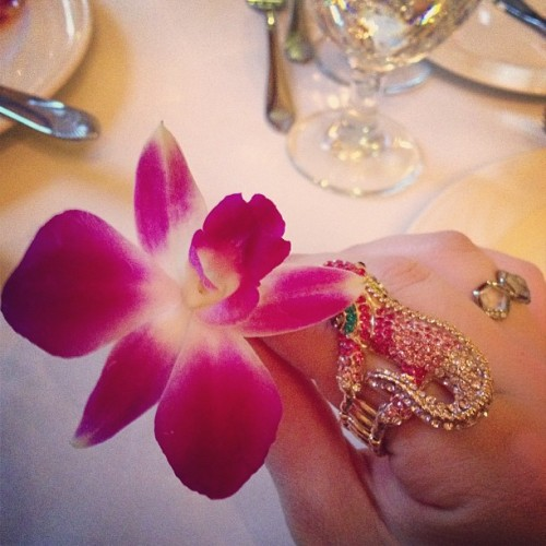#Orchid and my blingy iguana ring. #jewelry #flowers