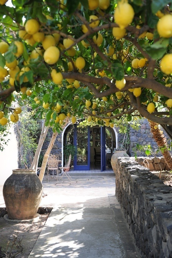 {space envy} i want a lemon tree!