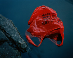 bbg97:  kevintrageser:  Chinatown, NYC  plastic bag is beauty
