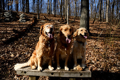 My buddies - Abby, me and Lucy.