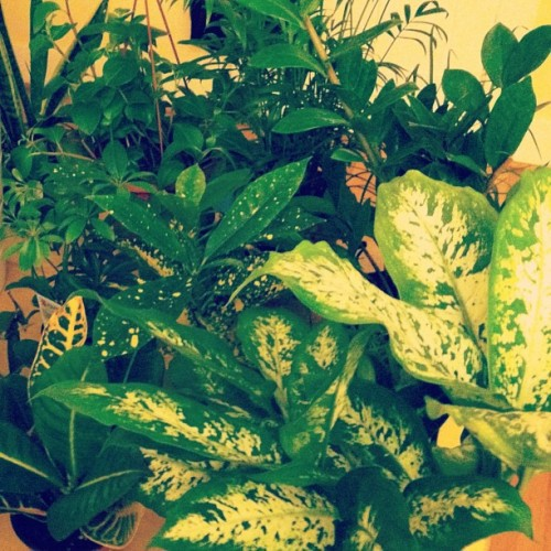 Feb 9: We bought a lot of plants today.  I miss the ones i left behind in NY but these guys will help with the loss.