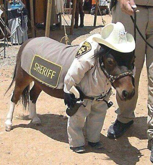 georgetakei:  Does this sheriff look a little hoarse to you? I vote neigh.