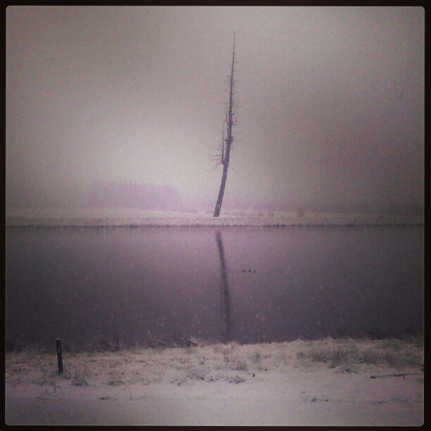 Snow for xmas, eagle's roost on the reservoir #xmas #tree