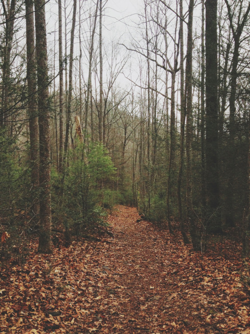 ashgatsby:  Blood Mountain Trail, Vogel State Park, Georgia