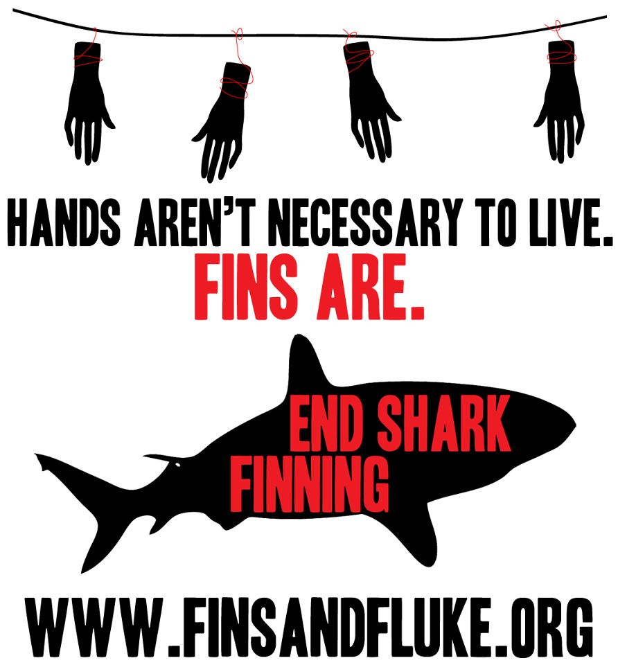 Want to win a Fins and Fluke t-shirt? Here's how: Take a photo of yourself with Shark Stanley. (You can find the cutouts here: Shark Defenders: Shark Stanley) Visit the competition page on Fins and Fluke's facebook and submit your entry.  Remember to be as creative as possible. The winner will receive a Fins and Fluke t-shirt. (Pictured above) Contest ends on February 1st. Good luck!