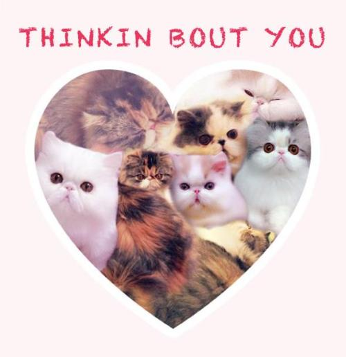 Happy Valentine's Day from the Fluffs. Enjoy this funny card we made for you guys!