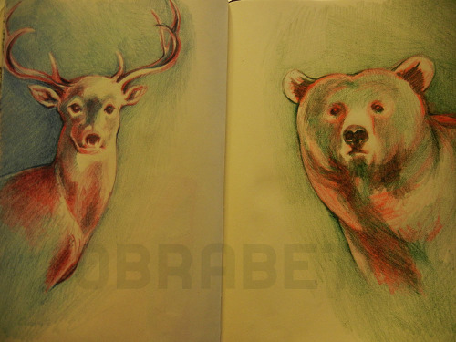 Deer bear. Coloured pencils.