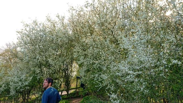 #blossom #blossoms #travel #walk #walking #exercise #dansaalfurinn #nature #nofilter #nofilterneeded #family #hiking #adventure #travelphotography  https://www.instagram.com/p/CNxLjtJDIqe/?igshid=1dn31203hqqpy #blossom#blossoms#travel#walk#walking#exercise#dansaalfurinn#nature#nofilter#nofilterneeded#family#hiking#adventure#travelphotography
