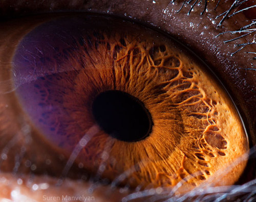 photojojo:  Using one heck of a macro lens, photographer Suren Manvelyan captured an insane level of detail on various animal's eyes. Suren also has a series of close-ups of human eyes that are worth checking out! Macro Photos Reveal Amazing Detail in Animals' Eyes via Bored Panda