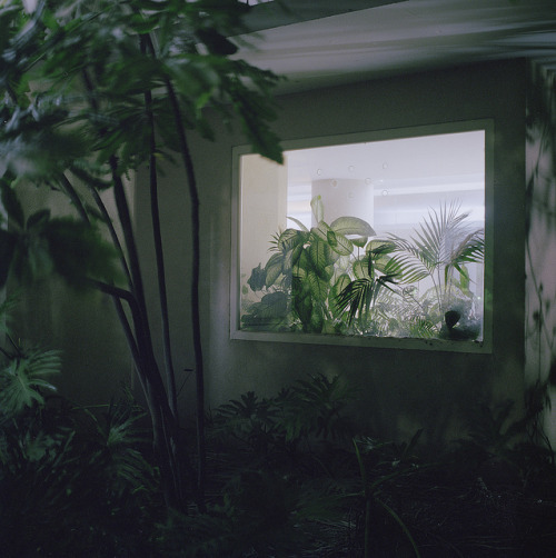 hiromitsu:  untitled by sasha tamarin on Flickr.
