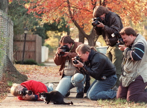 isabubbles:  Socks, Bill Clinton's cat, being hounded by the paparazzi
