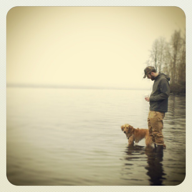 Foggy morning swim. #goldenretriever #seattle  (at Magnuson Park Off-Leash Dog Park)