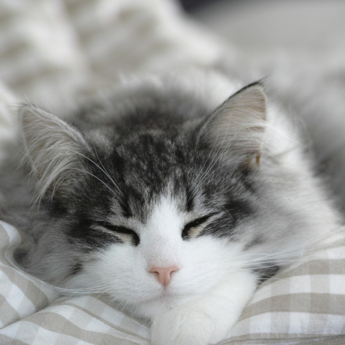 photogenicfelines:  (sevenhalf ☆)