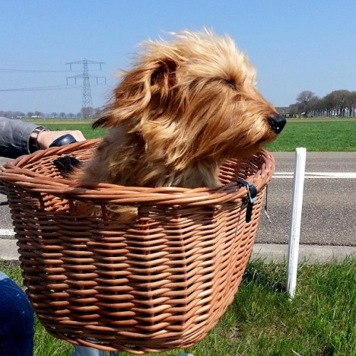 thefluffingtonpost:  PHOTO OP: The Wind in Your Fur Via berehap.