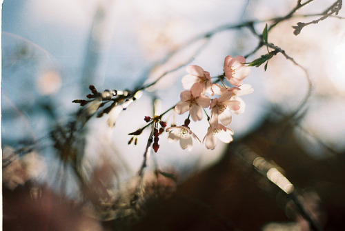 Flower by Lomhome on Flickr.