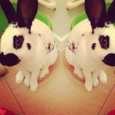 My bunny Nova :) dilated-mirrors.tumblr.com
