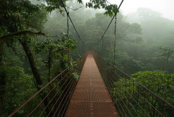 elorablue:   Hanging bridge in the canopy, Monteverde by ClifB on Flickr.