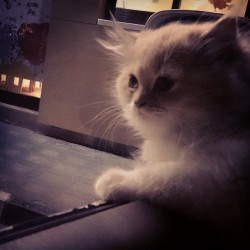 #Cat #kitty #kitten #No #Name #Myaw #Meaw #Cute #Nice #Son #of #Khnowsha #Brrnaw #قط #قطه #قطوه #مياو #حلو #عجيب #كيوت