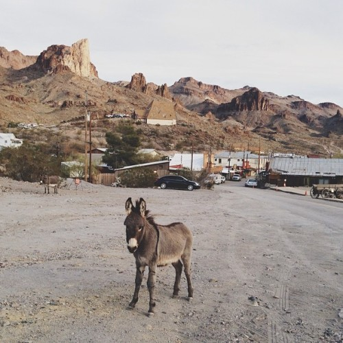 Just a little guy (at Oatman, AZ)