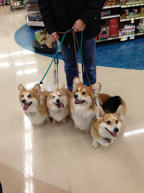 ahouseonfire:  GIVE ME ALL OF THE CORGIS.