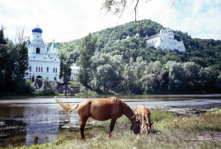 arquerio:  Horses near the river, Svyatogorsk, Ukraine by Christopher_JM on Flickr.