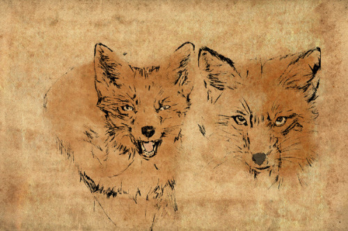 eatsleepdraw:  Foxes by Est.84