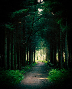 brutalgeneration:  Forest by netzanette on Flickr.