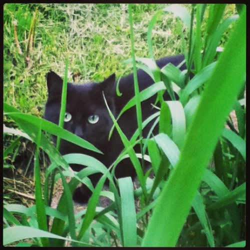 Stalking the cat