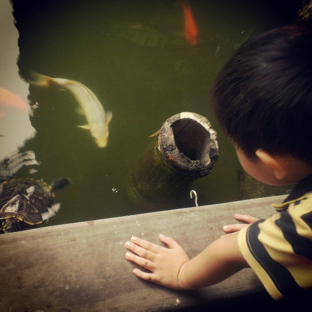 unusual friendship. #kid #adorable #boy #curious #Curiosity #koi #fish #pond #oldtown #cafe #turtle #imagination #fantasy #instadaily #instashot #instacity #cyberjaya #malaysia #putrajaya #putrajaya #photography #photo #picture #shot #igphoto #tagsforlike