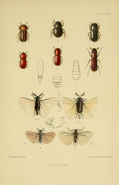 The Coleoptera of the British islands by BioDivLibrary on Flickr. London :L. Reeve & co.,1887-1913..biodiversitylibrary.org/page/14386067