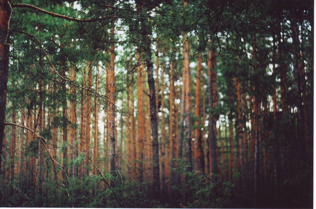 savvydarling:  forest by cray0lla on Flickr.