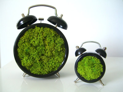 dark-rye:  What time is it? Springtime. Wake up and be green like everything else.