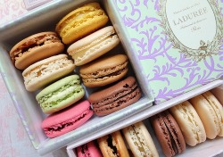 macarons are the cutest.