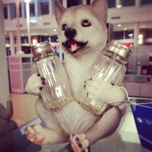 Oh yeah, this was in Chicago #chicago #dog #weird #jars #lol
