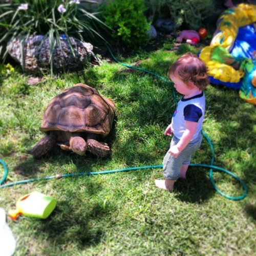 Baby Huxley saying HI to our green lawn mower Yortoise. #tortoise #turtle #sulcata #baby #sunday #yortoise