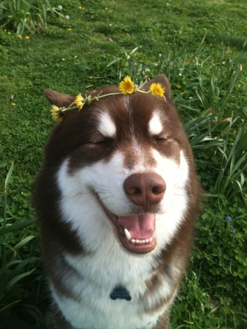 solivagant-strums:  faded-gl0ry:  IT'S A DOG WITH A DANDELION HEADBAND OMG I CRY  GO 'HEAD GURL, I'LL CRY WITH YOU!!!